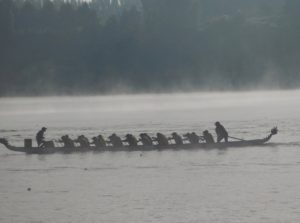dragons abreast brisbane at new zealand regatta